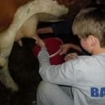 milogosce-aktivnosti-za-decu-seoski-turizam-27