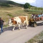 milogosce-aktivnosti-za-decu-seoski-turizam-6