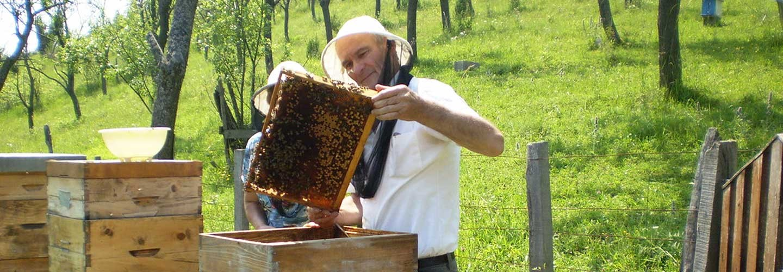 Пчеларство: домаћи мед